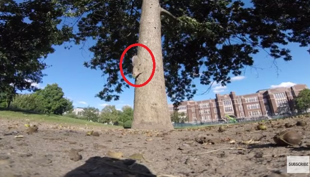 Squirrel Steals GoPro And Accidentally Takes Amazing Footage On Tree